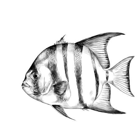 대서양 물고기 스케치 벡터 그래픽 흑백 드로잉 일러스트