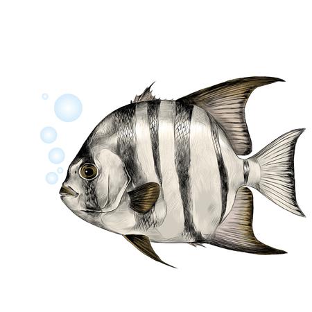 대서양 물고기 - 삽 스케치 벡터 그래픽 컬러 사진