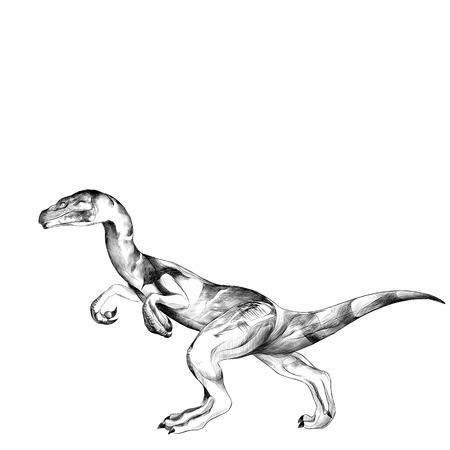 恐竜はその後ろ足スケッチ ベクトル グラフィックスの黒と白の図面上