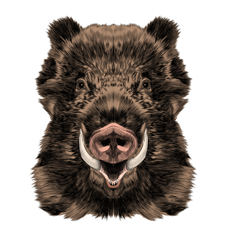 wild boar muzzle with fangs sketch vector graphics color picture