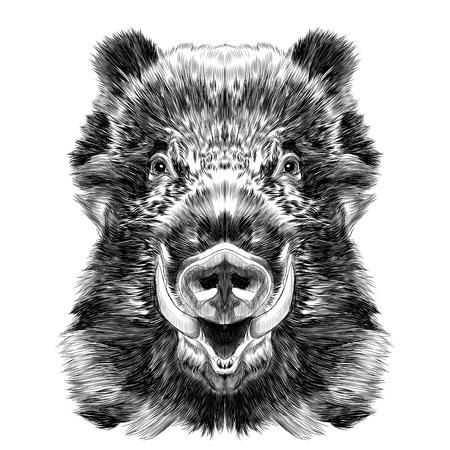 museau de sanglier avec des crocs croquis des graphiques vectoriels dessin noir et blanc