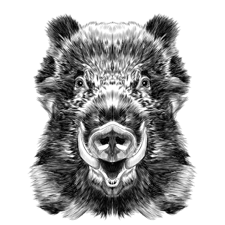 wild boar muzzle with fangs sketch vector graphics black and white drawing