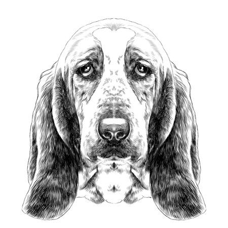 長い耳とバセットハウンドの品種、犬の頭をスケッチ ベクトル グラフィックスの黒と白の図面