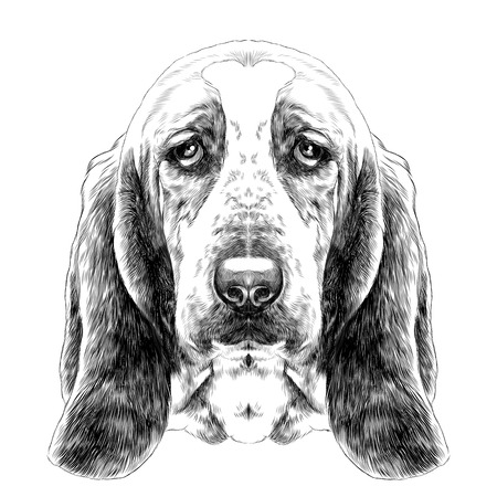 the head of the dog, breed Basset hound with long ears, sketch vector graphics black and white drawing