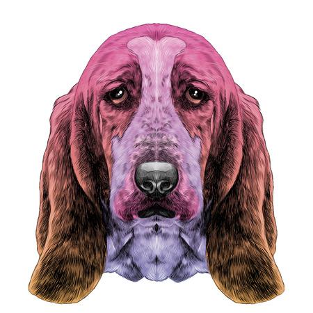개, 머리 품종 바 셋 하 운 드와 긴 귀, 벡터 그래픽 스케치 다른 색