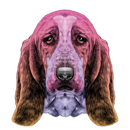 the head of the dog, breed Basset hound with long ears, sketch vector graphics colored drawing gradient of different colors