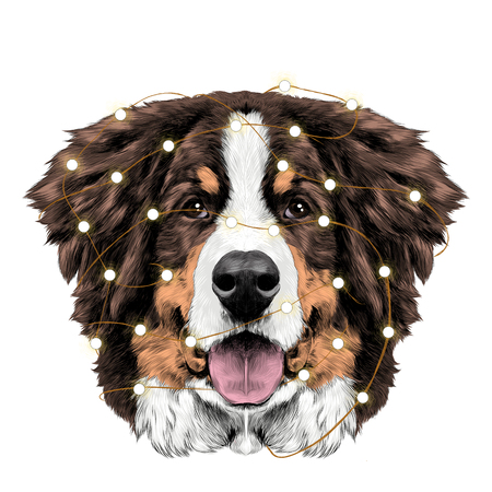 the dog head is symmetrical front the Bernese mountain dog tangled in Christmas lights sketch vector color drawing Illustration