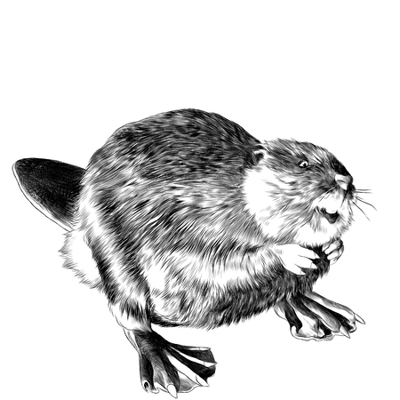 beaver stands on its hind legs sketch vector graphics black and white drawing