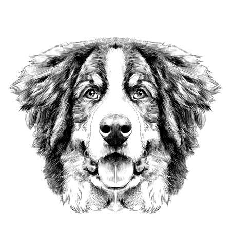 la testa del cane è simmetrica davanti al Bernese cane di montagna disegno sketch vettoriale bianco e nero Vettoriali