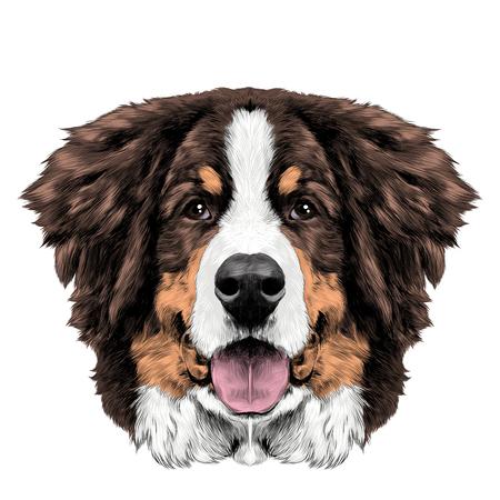 개 머리 대칭 전면 Bernese 산 개 스케치 벡터 색 드로잉