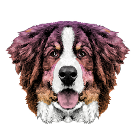 the dog head is symmetrical front the Bernese mountain dog sketch vector color gradient from pink to Oran
