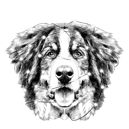 the dog head is symmetrical front the Bernese mountain dog tangled in Christmas lights sketch vector black and white drawing