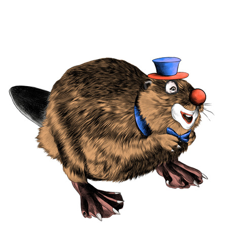 beaver stands on its hind legs the clown in the hat sketch vector graphics color picture
