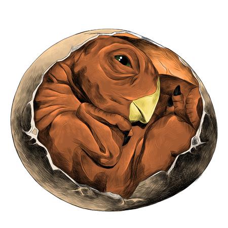 dinosaurus ei uitgebroed gerold in een bal pasgeboren schets vectorafbeeldingen kleurenbeeld Stock Illustratie