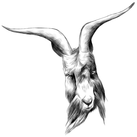 the head sheep with large horns, sketch vector graphics black and white drawing