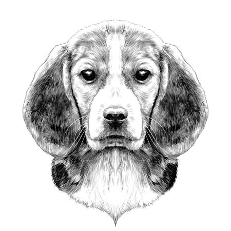 犬頭繁殖ビーグル スケッチ ベクトル グラフィックスの黒と白の図面