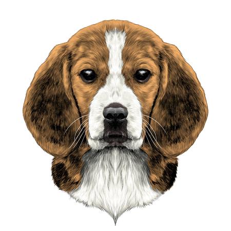 頭犬種ビーグル スケッチ ベクトル グラフィック カラー写真  イラスト・ベクター素材