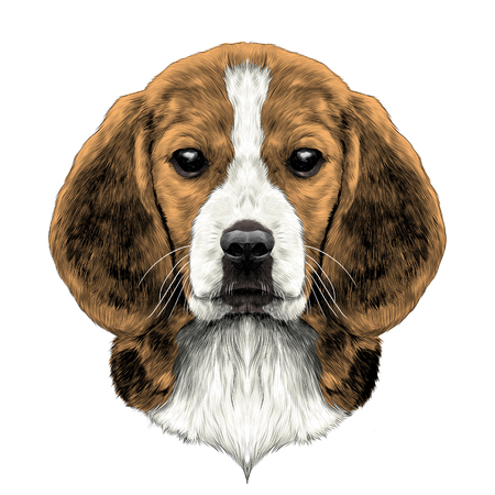 dog head breed Beagle sketch vector graphics color picture