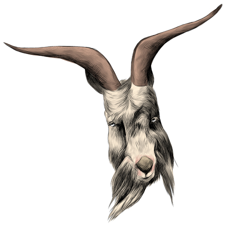 the head sheep with large horns, sketch vector graphics color picture Ilustração