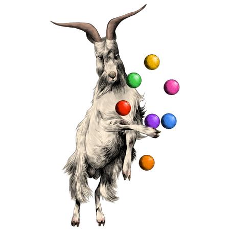 schaap is op zijn achterpoten in een circus en jongleren met ballen, schets vectorafbeeldingen kleurfoto