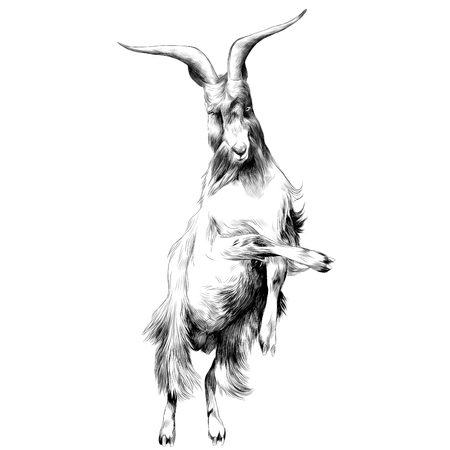 sheep in full growth stands on his hind legs in the jump dance, sketch vector graphics black and white drawing