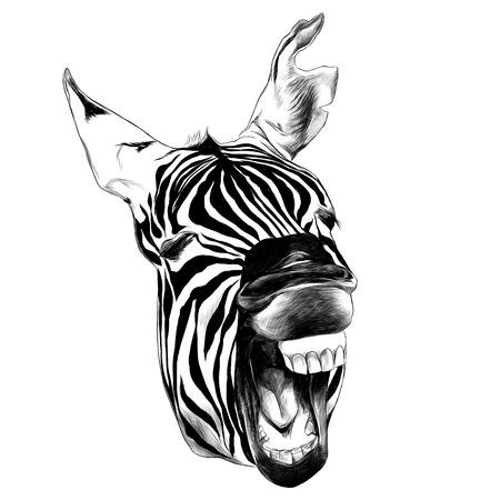 Zebra head contorts face.