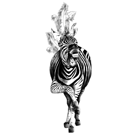 Zebra full height illustration.