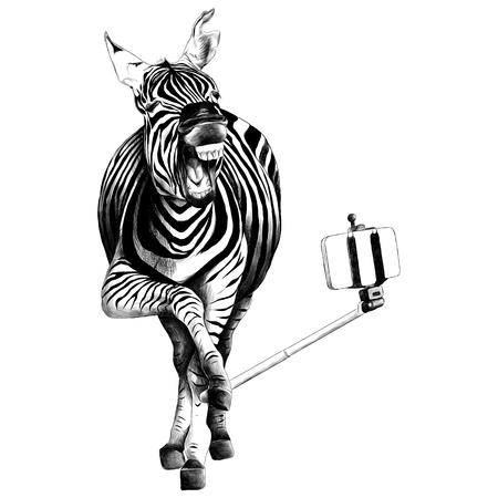 Zebra full height.