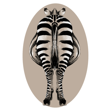 Zebra is back in a full-length illustration.