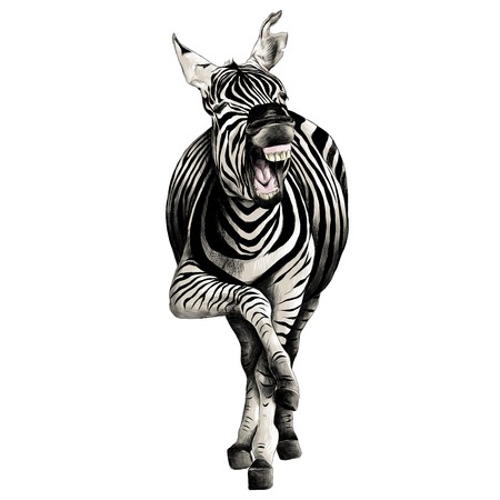 Zebra full height illustration. Stok Fotoğraf - 83703861