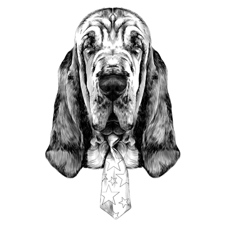 the head of the dog breed Bloodhound vector graphics sketch black and white with bow tie circus Illustration