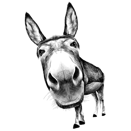 ass front view with a large head, looks black and white illustration monochrome Иллюстрация