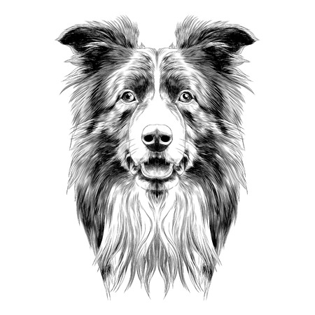 dog head breed border collie sketch vector graphics black and white monochrome
