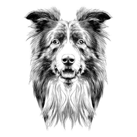 hond hoofd ras border collie schets vectorafbeeldingen zwart en wit monochroom