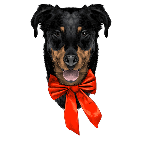 French shepherd dog head sketch vector graphics color coloring bow holiday new year
