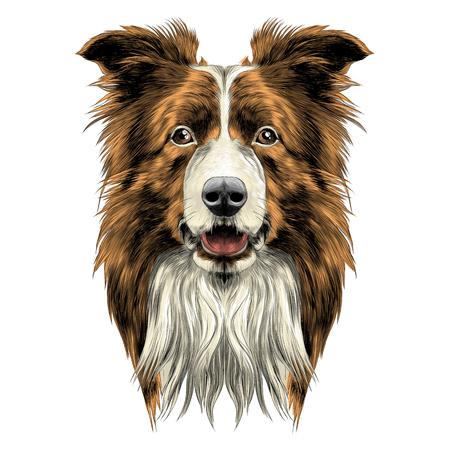 hond hoofd ras border collie schets vectorafbeeldingen gekleurde tekening Stock Illustratie