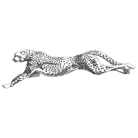 Cheetah running sketch vector graphics black and white monochrome Stock Illustratie