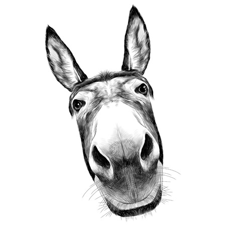ass front view with a large head, looks black and white illustration monochrome Vettoriali
