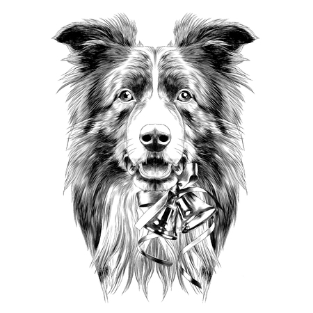 dog head breed border collie sketch vector graphics color drawing of a new year bells