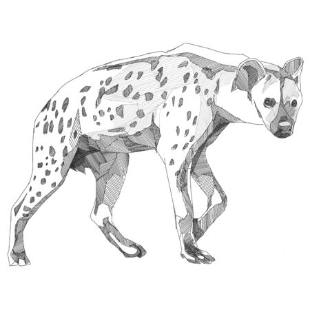 Hyena sketch vector graphics