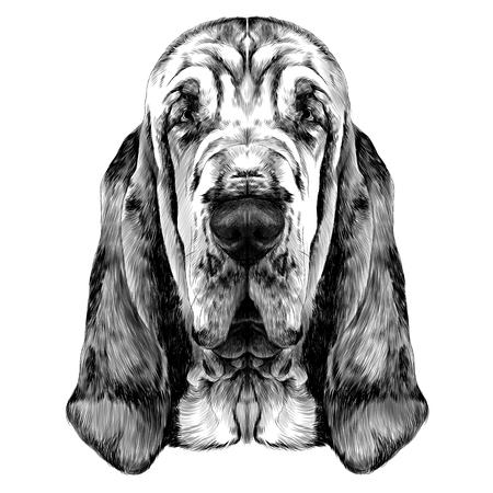 犬ブラッドハウンド ベクトル グラフィックの頭は黒と白をスケッチします。
