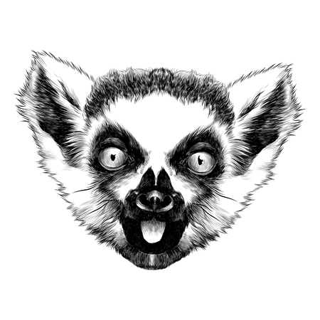 limur head striped sketch vector graphics monochrome black and white Çizim