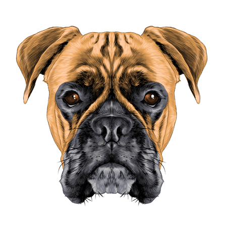 A head of a boxer dog colored sketch