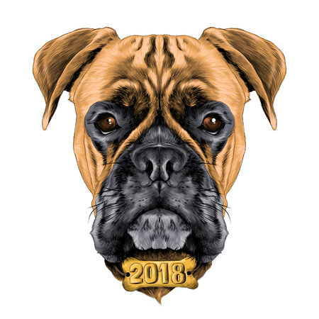 the head of the dog breed boxer dog collar c a vector sketch graphics colored drawing with the collar bone the new year Illustration