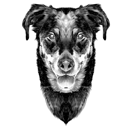 French shepherd dog head sketch vector graphics monochrome black and white Illustration