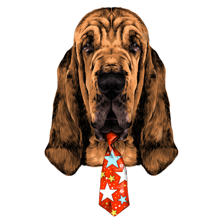 bloodhound: the head of the dog breed Bloodhound vector graphics colored sketch with a tie circus