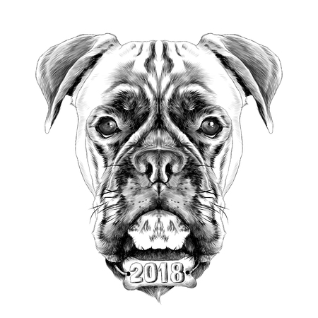 A boxer dog vector sketch graphics.