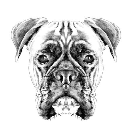 犬種ボクサー犬の首輪 c ベクトルの頭スケッチ グラフィックスは黒と白のイラスト白黒  イラスト・ベクター素材