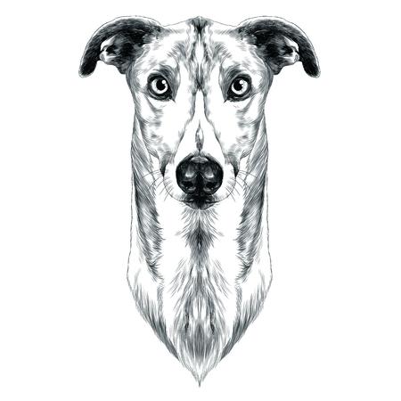 Races de chiens Greyhound herbe croquis graphiques vectoriels monochrome Banque d'images - 84433991