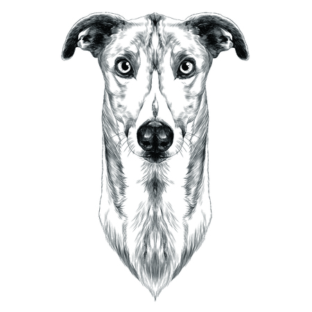 dog breeds Greyhound grass sketch vector graphics monochrome Illustration